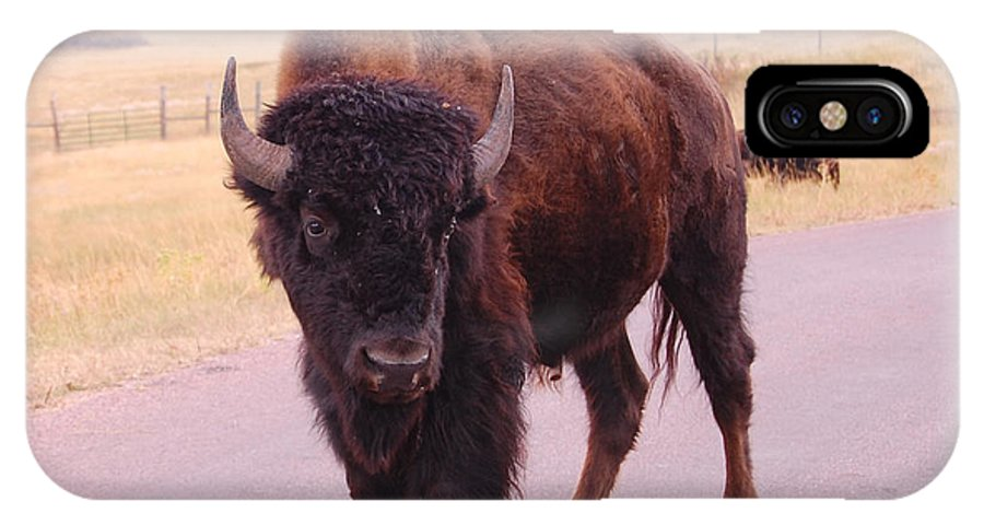 Buffalo IPhone X Case featuring the photograph Defiance by Dan Taylor
