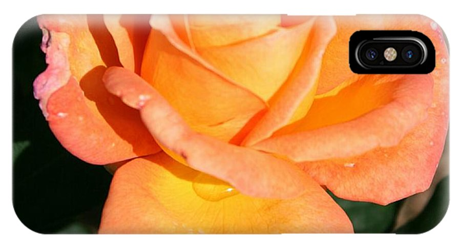 Rose IPhone X Case featuring the photograph Delightful by Christiane Schulze Art And Photography