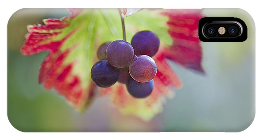 Grape IPhone X Case featuring the photograph Delightful Moment by Maria Ismanah Schulze-Vorberg