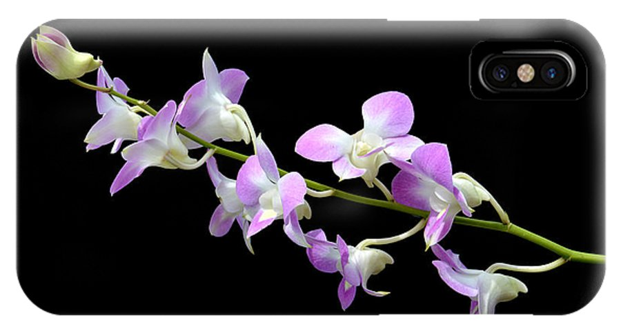 White IPhone X Case featuring the photograph Dendrobium Orchid by Antoni Halim
