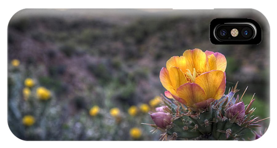 Sunset IPhone X Case featuring the photograph Desert Sunset Blossom by Anthony Citro