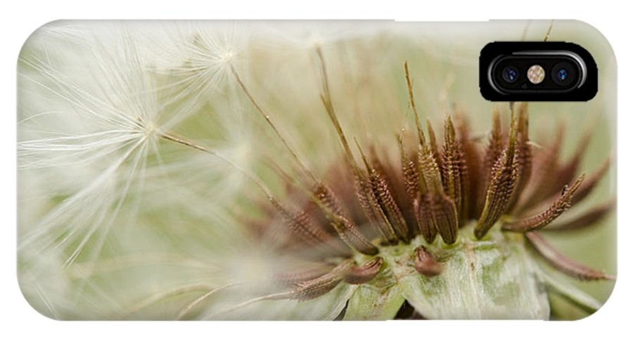 Dandelion IPhone X Case featuring the photograph Details By Design by Julie Wynn