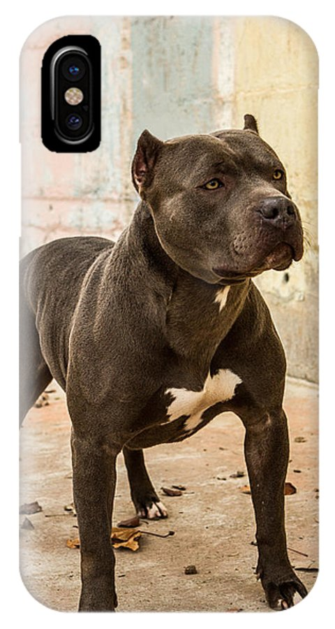 Pitbull Dogs Breeders IPhone X Case featuring the photograph Deuce by Jerad Roberts