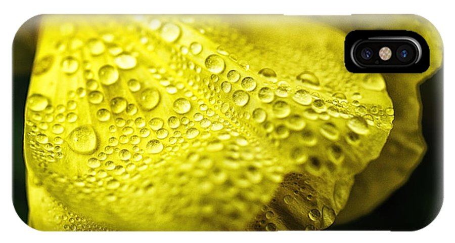 Common Evening Primrose IPhone X Case featuring the photograph Dew On Primrose by Thomas R Fletcher