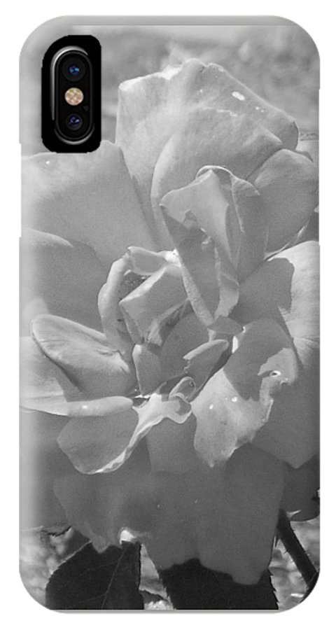 Rose IPhone X Case featuring the photograph Dew Rose by Pharris Art