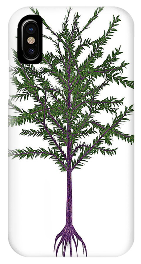 Tree IPhone X Case featuring the photograph Dicroidium Prehistoric Seed Plant by Elena Duvernay