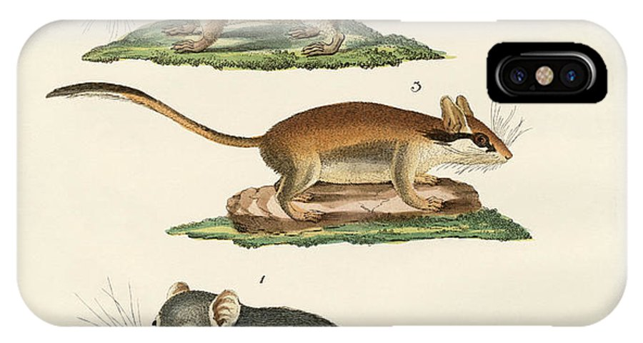 Fat Dormouse IPhone X Case featuring the drawing Different Kinds Of Sleepers by Splendid Art Prints