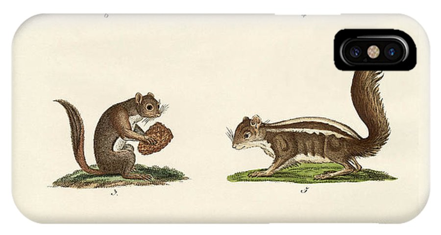 Squirrel IPhone X Case featuring the drawing Different Kinds Of Squirrels by Splendid Art Prints
