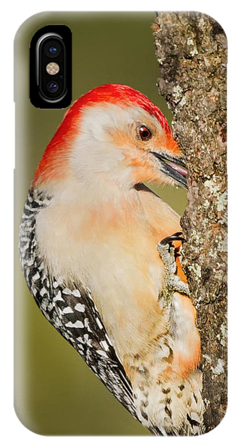 Woodpecker IPhone X Case featuring the photograph Diggin by Bill Wakeley