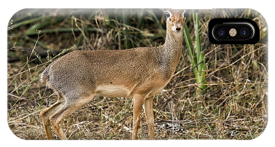 Africa IPhone X Case featuring the photograph Dik-dik by Timothy Hacker