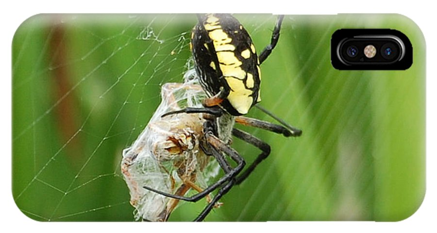 Spider IPhone X Case featuring the photograph Dinner by Dan Taylor