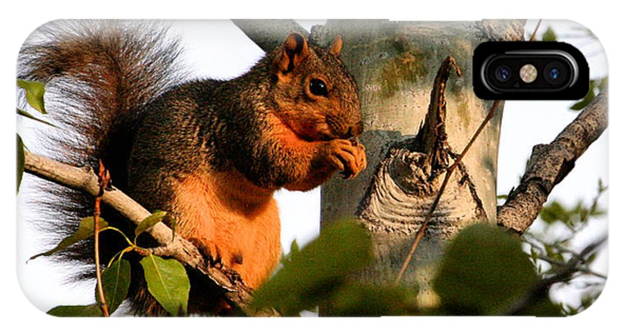 Fox Squirrel IPhone X Case featuring the photograph Dinner Time by Ray Finch