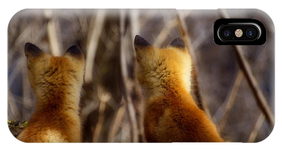Kit Fox IPhone X Case featuring the photograph Distracted by Thomas Young