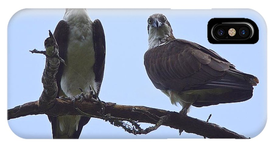 Osprey IPhone X / XS Case featuring the photograph Do Not Disturb by MCM Photography