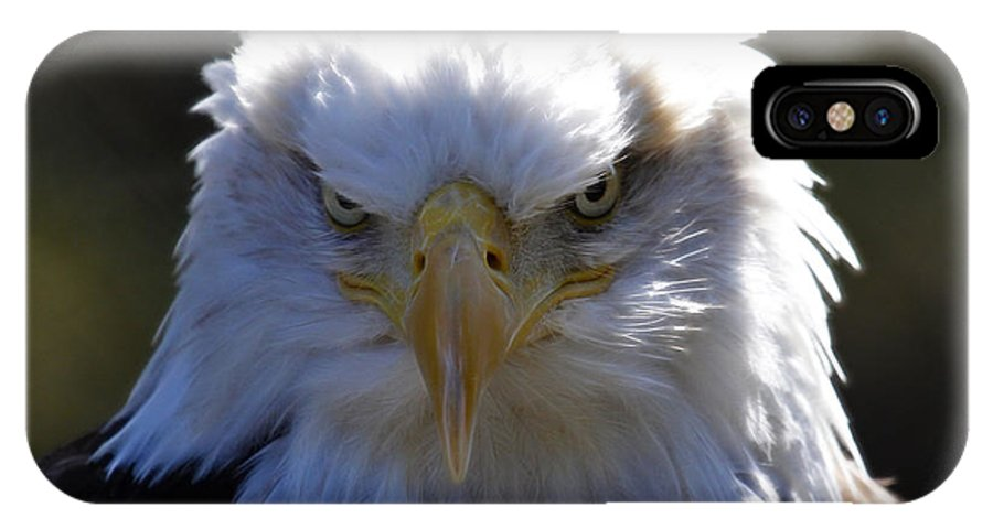 Bald Eagle IPhone X Case featuring the photograph Do You Feel Lucky? by Steve McKinzie