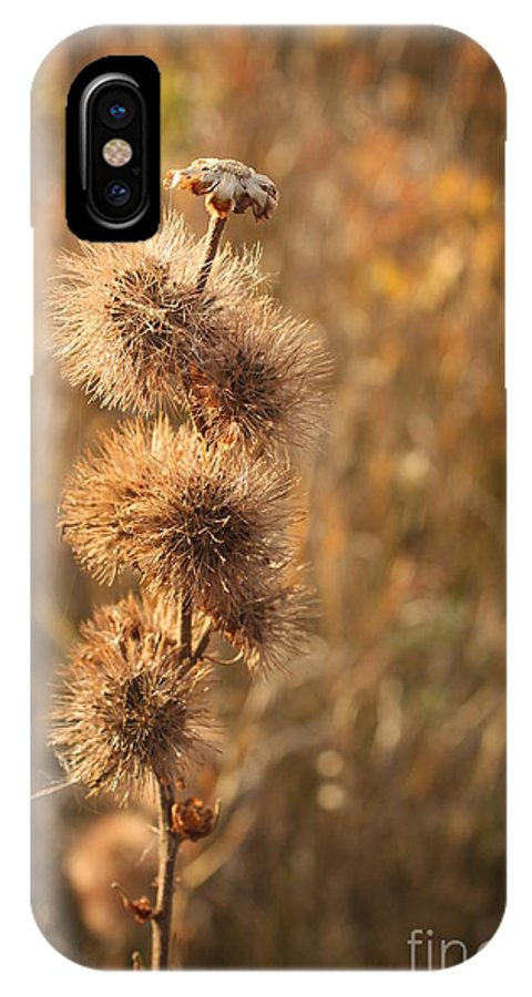 Burs IPhone X Case featuring the photograph Do You Like My Fur Coat? by Stephen Thomas