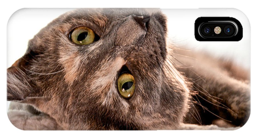 Cats IPhone X Case featuring the photograph Flirting by Kristin Hatt