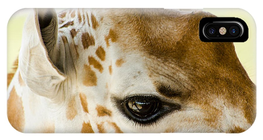 Giraffe IPhone X Case featuring the photograph Doe Eyes by Gaurav Singh