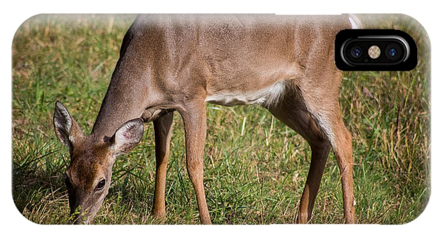 Doe IPhone X Case featuring the photograph Doe In Cades Cove 2 by Chad Kanera