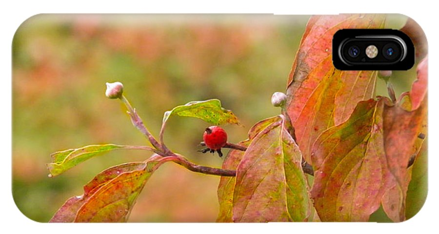 Berry IPhone X Case featuring the photograph Dogwood Berrie by Nick Kirby