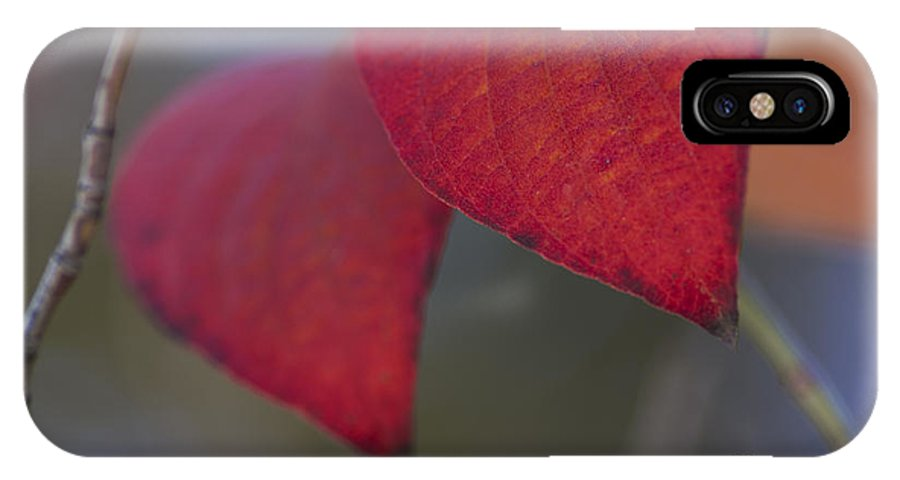 Fall IPhone X Case featuring the photograph Dogwood Leaves In Fall by Fred Ziegler