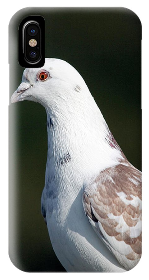 Columba Livia IPhone X Case featuring the photograph Domestic Pigeon by John Devries/science Photo Library