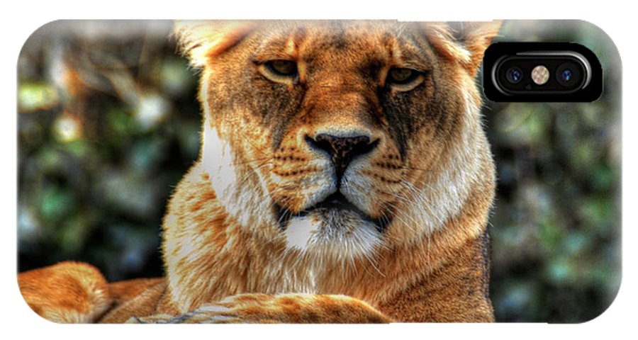 Lion IPhone X Case featuring the photograph Don't Blink... by Michael Frank Jr