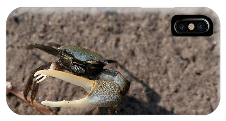 Crab IPhone X Case featuring the photograph Don't Fiddle With Me by April Wietrecki Green