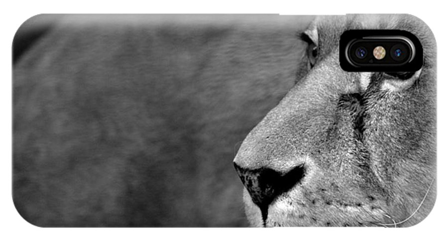 Lion IPhone X Case featuring the photograph Don't Wake The Lion by Andreas Berheide