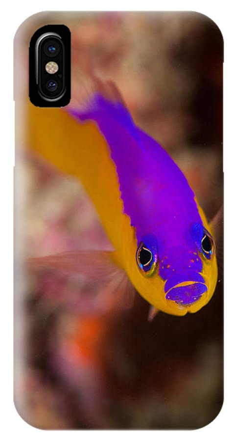 Clown IPhone X Case featuring the photograph Dottybacks Reef Fish by Jill Jermann