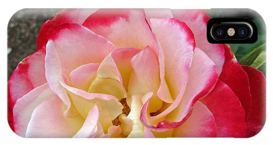 Floral IPhone X Case featuring the photograph Double Delight Hybrid Tea Rose by Barbara McDevitt
