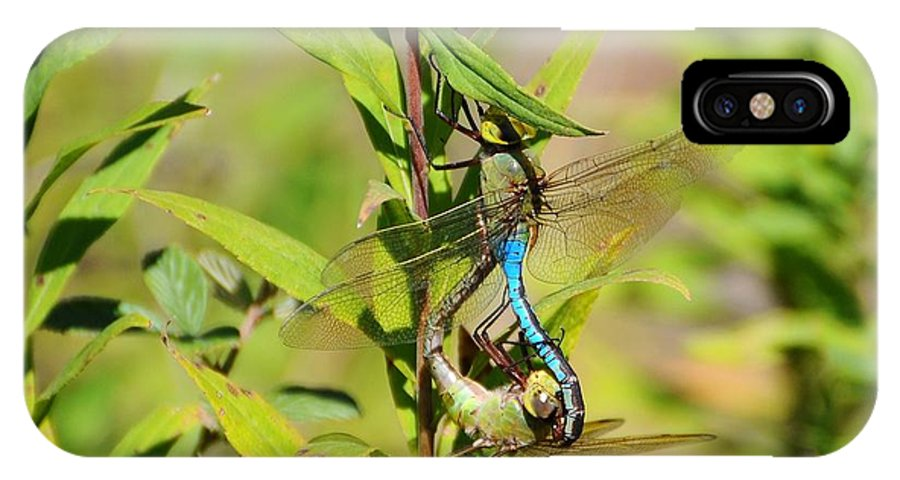 Dragonfly IPhone X / XS Case featuring the photograph Double Dragon by Al Powell Photography USA