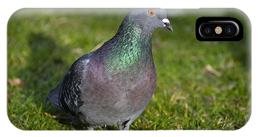 Dove IPhone X Case featuring the photograph Dove by Mats Silvan