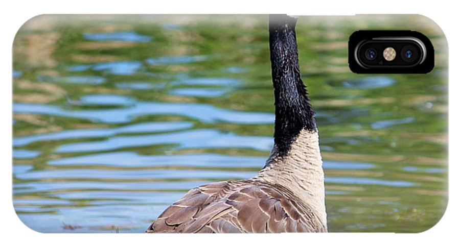Goose IPhone X Case featuring the photograph Down Around The Pond by Cynthia Guinn