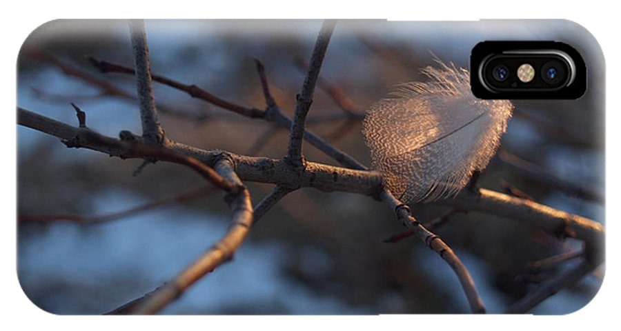 Branch IPhone Case featuring the photograph Downy Feather Backlit On Wintry Branch At Twilight by Anna Lisa Yoder