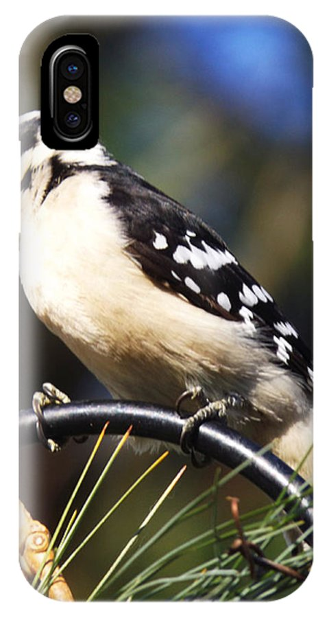 Bird IPhone X Case featuring the photograph Downy Woodpecker 2 by Cynthia Syracuse