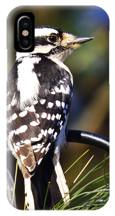 Birds IPhone X Case featuring the photograph Downy Woodpecker 3 by Cynthia Syracuse