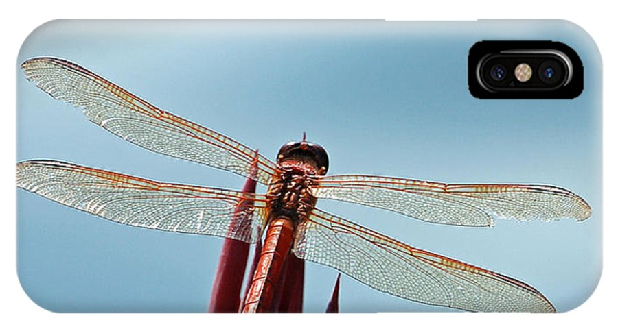 Dragonfly IPhone X Case featuring the photograph Dragonfly Days by Suzanne Gaff