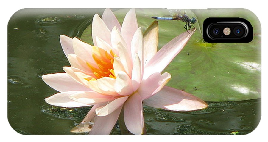 Dragon Fly IPhone X Case featuring the photograph Dragonfly Landing by Amanda Barcon
