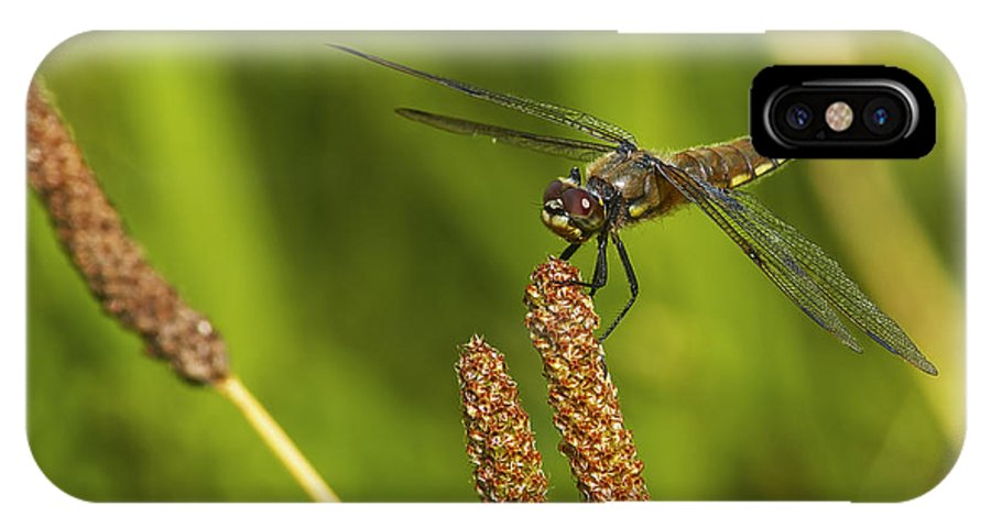 Dragonfly IPhone X Case featuring the photograph Dragonfly On Seed Pod 2 by Sharon Talson