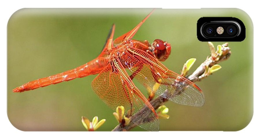 Dragonfly IPhone X / XS Case featuring the photograph Dragonfly Resting by Art Block Collections