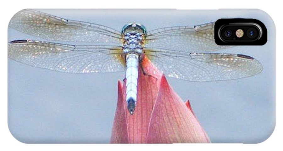 Dragonfly IPhone X Case featuring the photograph Dragonfly Resting by Dawn Sloane