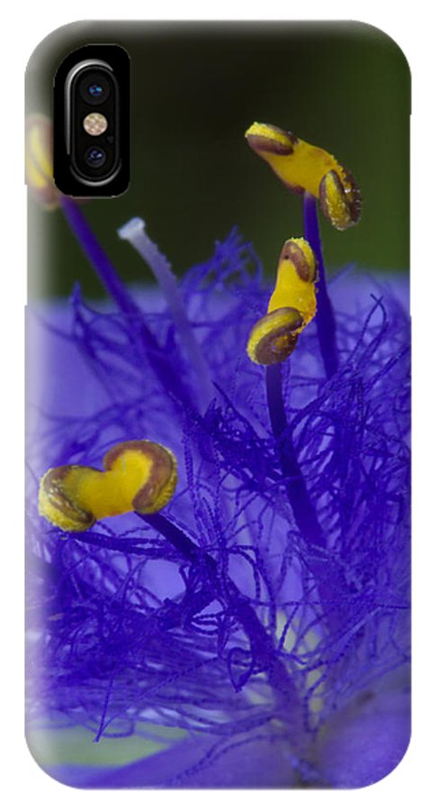 Spiderwort IPhone X Case featuring the photograph Dressed In Blue Jackets #2 by Paul Rebmann