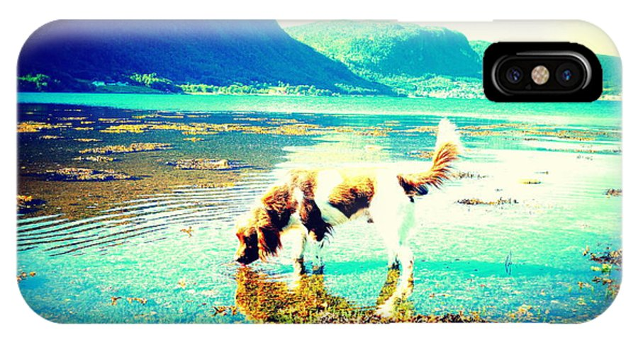 Norway IPhone X Case featuring the photograph Springer Spaniel Drinking Water From The Big Blue Sea by Hilde Widerberg