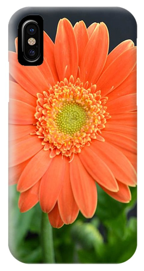 Flower IPhone X Case featuring the photograph Dsc0049d by Kimberlie Gerner