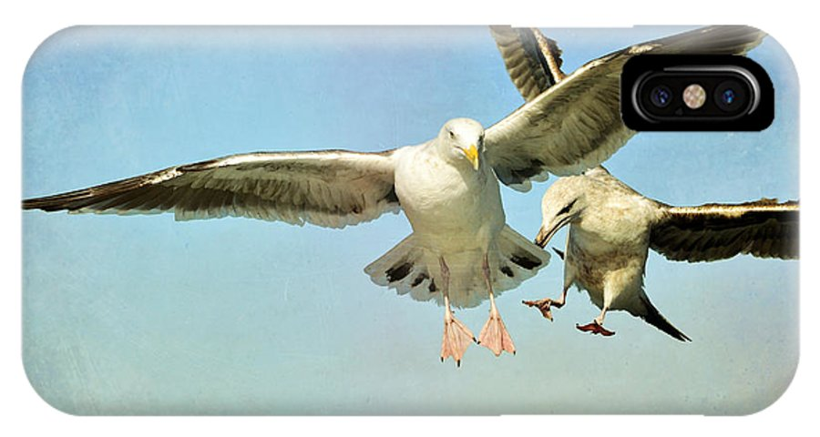 Seagulls IPhone X Case featuring the photograph Dual Landing by Fraida Gutovich