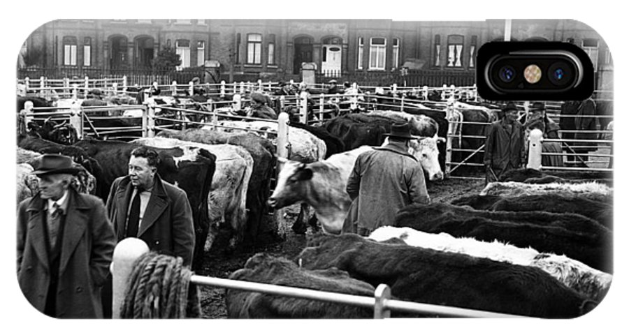 Cattle Market IPhone X Case featuring the photograph Dublin Cattle Market 1959 by Irish Photo Archive