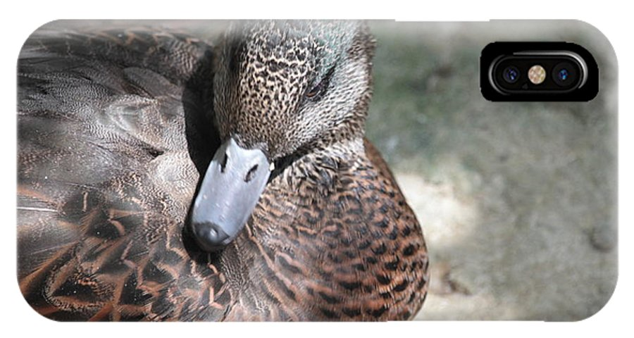 Duck IPhone X Case featuring the photograph Duck 2 by Dwight Cook