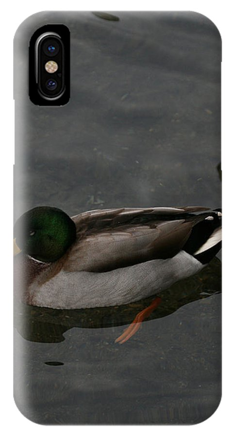 Mallard IPhone X Case featuring the photograph Duck Floating Around by Tim Senior