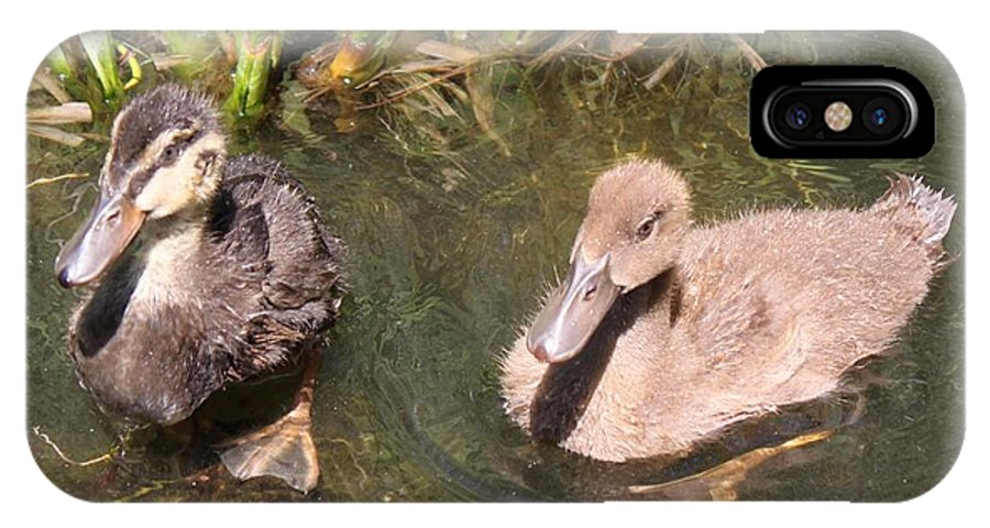Ducks IPhone X Case featuring the photograph Duckies In The Pond by Susan Provan